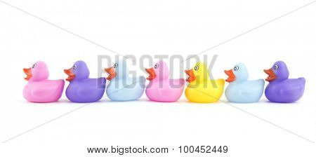Rubber ducklings in a row, on white - concept of leadership