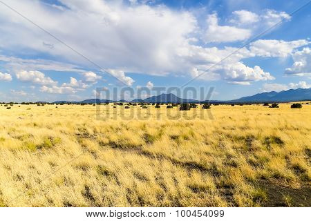 Prairie in Arizona
