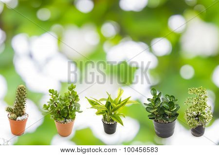Green Plants In The Small Pots On Green Bokeh Background