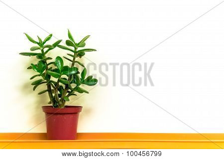 Single Green Plant And Simple Copyspace Background