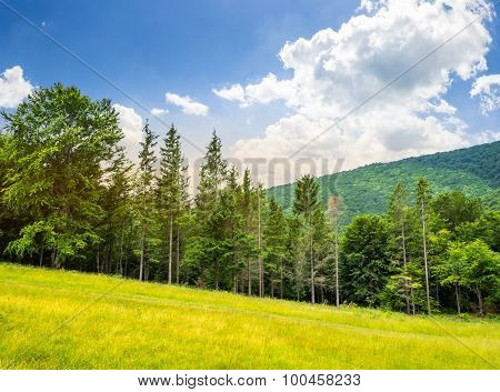 Coniferous Forest On A  Mountain Slope At Sunrise