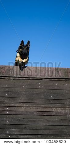 Jump Dog Over The Hurdle
