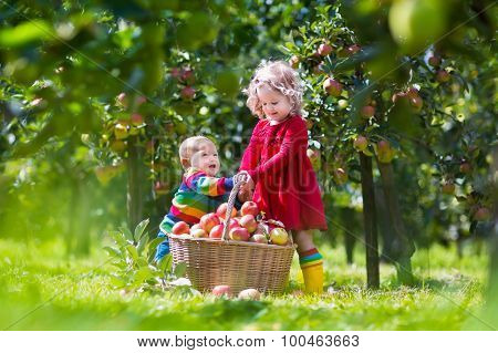 Kids Playing In Apple Tree Garden