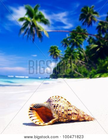 Shell on Tropical Beach Tranquil Scene Concept