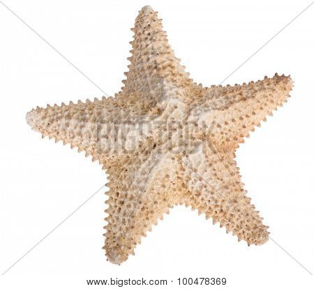 beige starfish isolated on white background