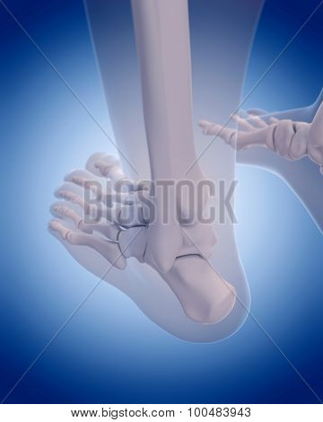 medically accurate illustration - bones of the  foot