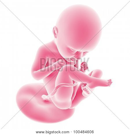 illustration of the fetal development - week 35