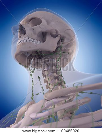 medically accurate illustration of the lymphatic system - the neck