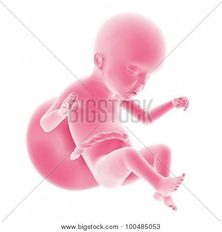 illustration of the fetal development - week 23