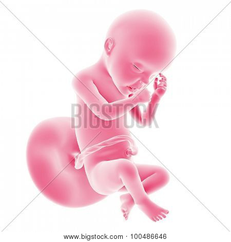 illustration of the fetal development - week 30