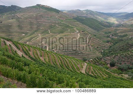 Terraced vineyards in the Douro Valley