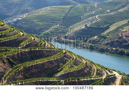 Terraced grapevines on the slopes of the Douro River Valley