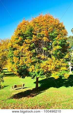 Suburban neighborhood at north USA in autumn