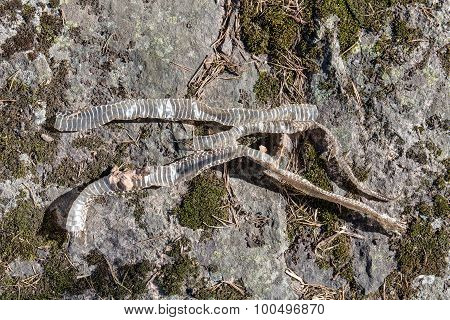 Old Discarded Snake Skin