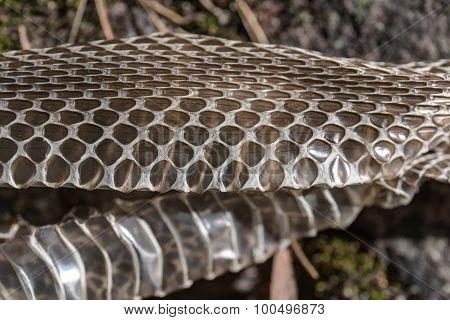 Skin Viper Close Up