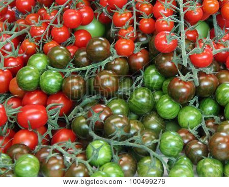 Freshly Picked Tomatoes.