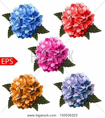 Vector set of realistic hydrangea, lavender. Illustration with flowers. Vintage. Can be used for gif