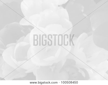 Semitransparent pastel monochrome tulip flowers background