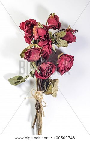 Tied Dried Roses