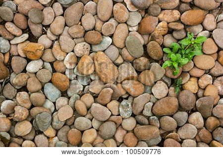 Weed And River Stones.