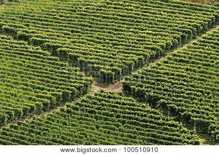 Crossing Of The Vineyard,