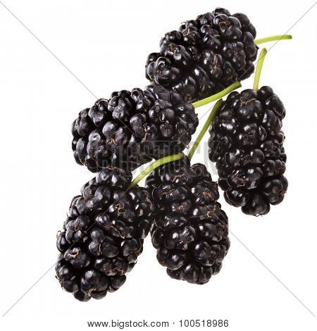 Mulberries fruits close up macro  Isolated on white background