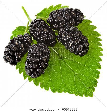 Mulberries in leaf Isolated on white background
