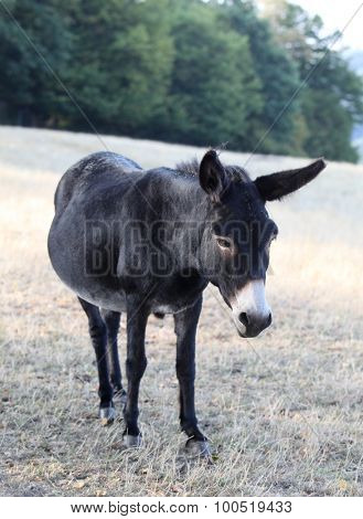 donkey on meadow
