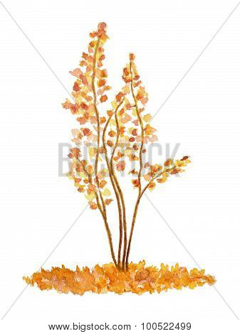 Watercolor Oak Tree, Hand Drawn And Painted, Isolated On White