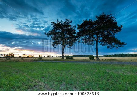 Sunset Sky Over Old Pine Trees And Countryside