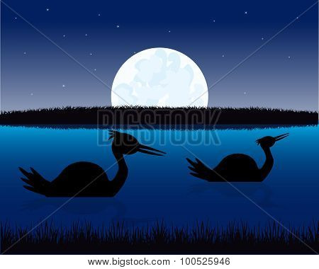 Night landscape with water and bird