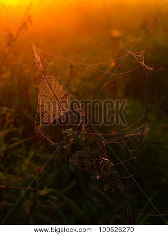 Spider web on a meadow at sunrise time