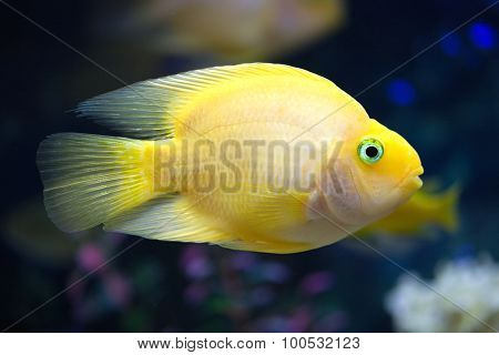 Exotic fish swims in deep blue water