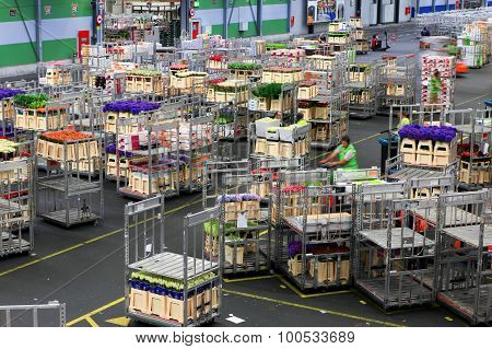 Auction floor at Aalsmeer's FloraHolland flower auction
