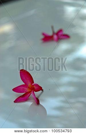 Pink Binonia Flower On Radiator Bonnet