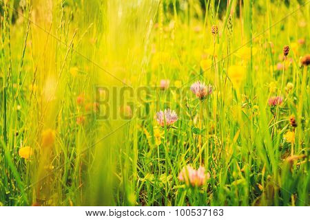 Mountain Meadow Full Of Flowers