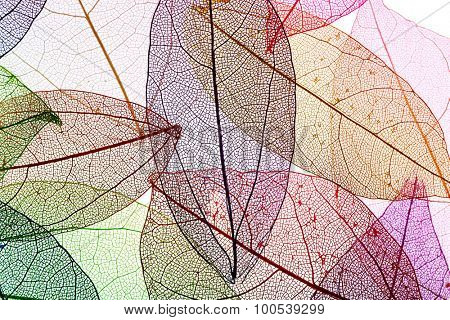 Multicolor decorative skeleton leaves