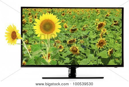 Monitor with nature wallpaper on screen isolated on white