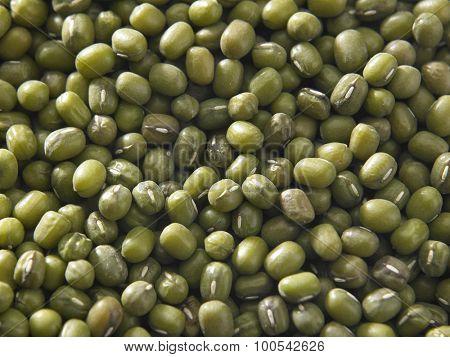 Green bean or mung bean background