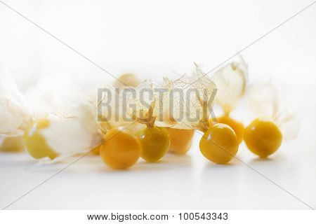 Husked Physalis Fruits