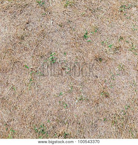 Dry Grass Ground, Seamless Background Texture