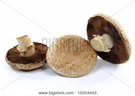 Orgânicos cogumelos Portobello superior e inferior.