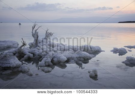 Salt Rocks And Tree At The Dead Sea