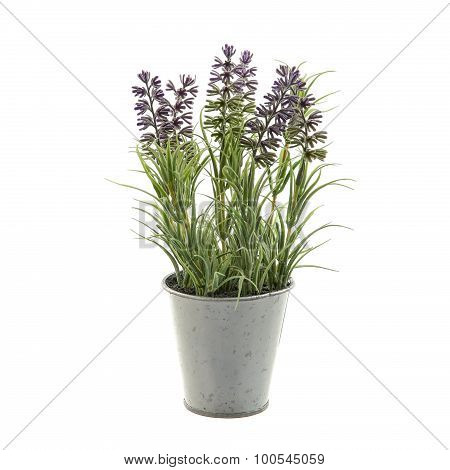 Lavender plant in a metal pot