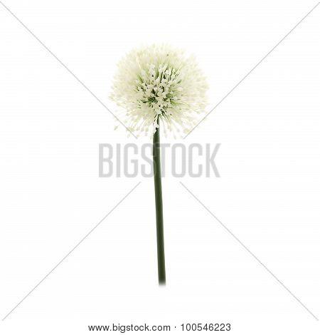 Artificial Allium flower