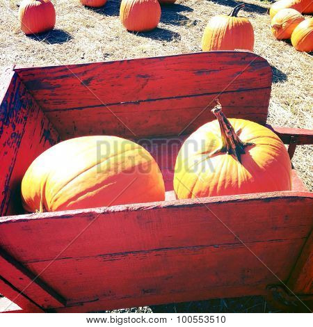 Pumpkins in a red wheel barrow - Instagram filter