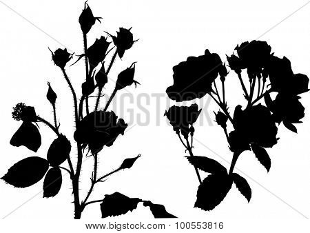 illustration with rose silhouettes isolated on white background