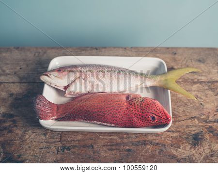 Exotic Fish In Tray