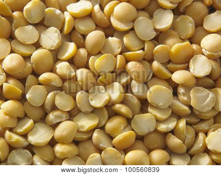 Channa dal, famous Indian legume also called yellow Pigeon peas