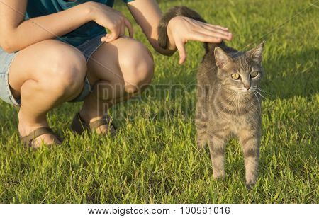 Blue tabby cat in green grass, with a person petting her on the background